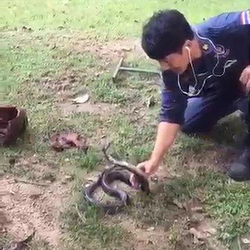ชมคลิป! กู้ภัยไทยทำได้ทุกอย่าง จับงูเห่าแผ่แม่เบี้ยกลางสนาม