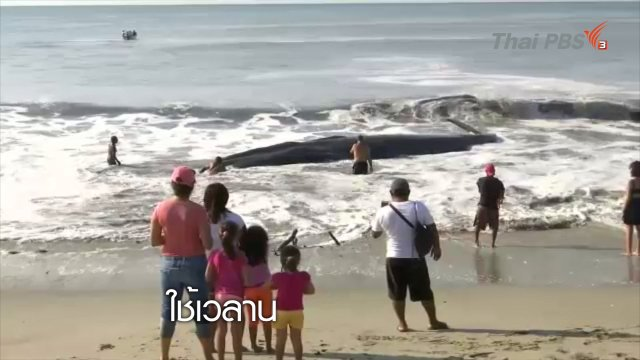 ช่วยวาฬในเม็กซิโก