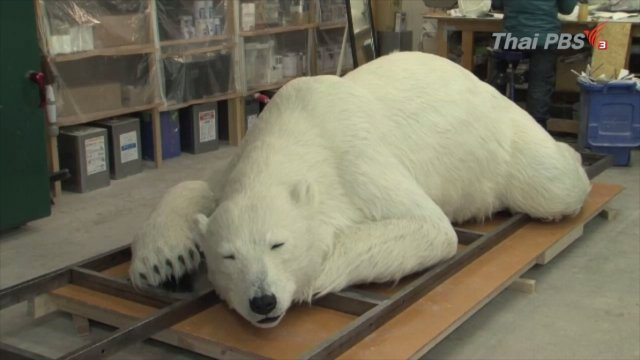 หุ่นจำลองหมีขั้วโลกสุดเหมือนจริง ที่ญี่ปุ่น
