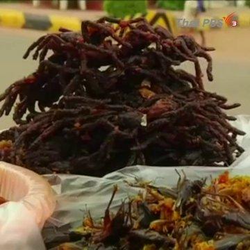 """""""แมงมุมทอด"""" อาหารยอดนิยมช่วงฤดูฝนของคนกัมพูชา"""