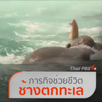 """ทหารเรือศรีลังกา """"ช่วยช้างตกทะเล"""""""