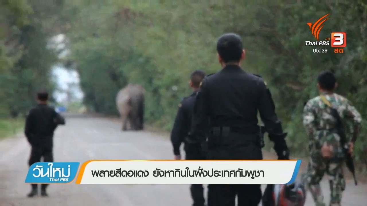 วันใหม่  ไทยพีบีเอส - พลายสีดอแดง ยังหากินในฝั่งประเทศกัมพูชา