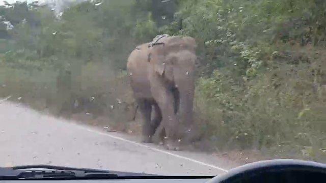 """""""ช้างป่า-ลิง"""" ป่าเขาอ่างฤาไนออกมาเดินบนถนน"""