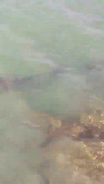 คลิปฉลามหน้าวัดถ้ำเขาเต่า (2)