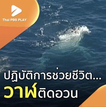 ปฏิบัติการช่วยชีวิตวาฬติดอวน