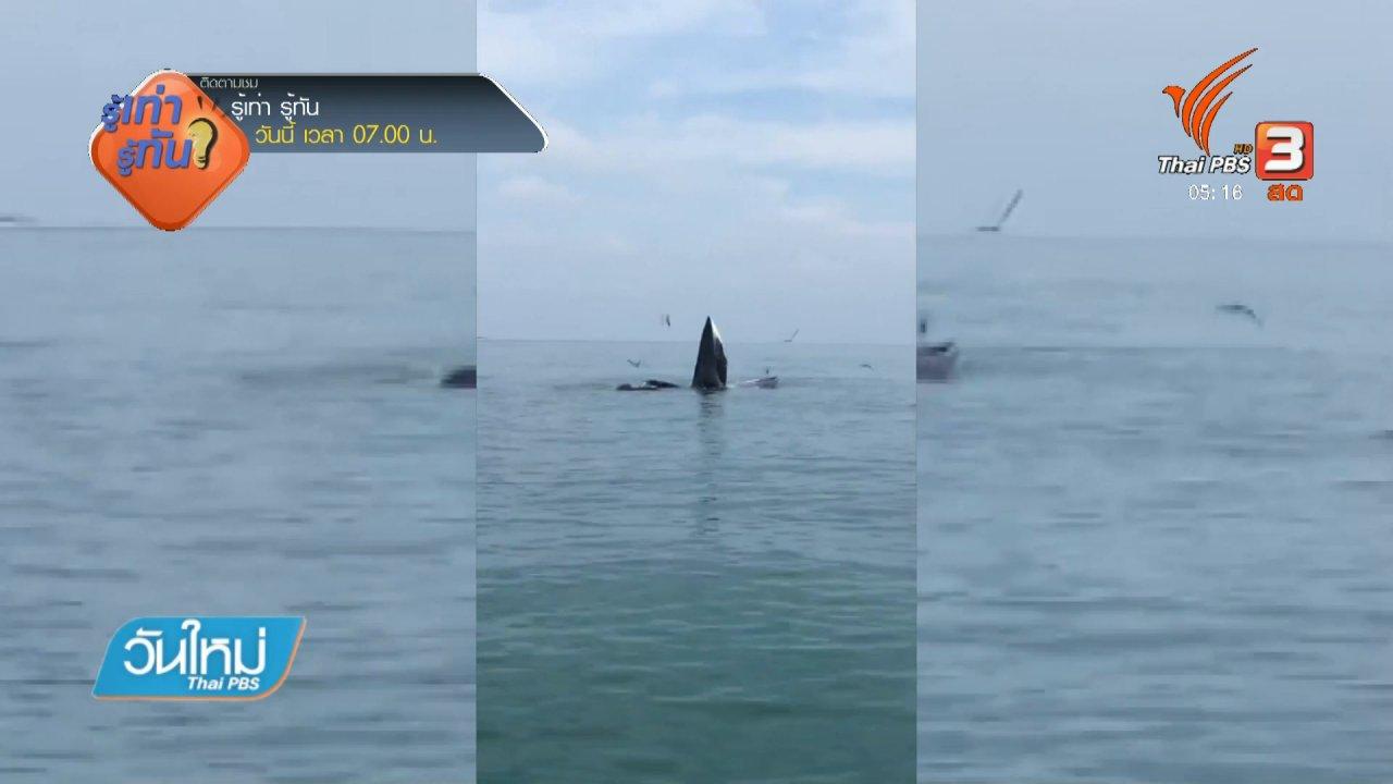 วันใหม่  ไทยพีบีเอส - พบวาฬบรูดา หมู่เกาะอ่างทอง จ.สุราษฎร์ธานี