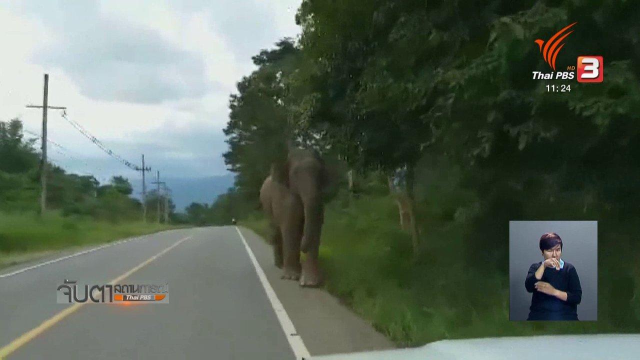 จับตาสถานการณ์ - เตือนระวังช้างป่าแก่งกระจาน หัวหิน