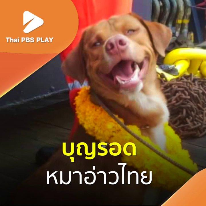 บุญรอด หมาอ่าวไทย