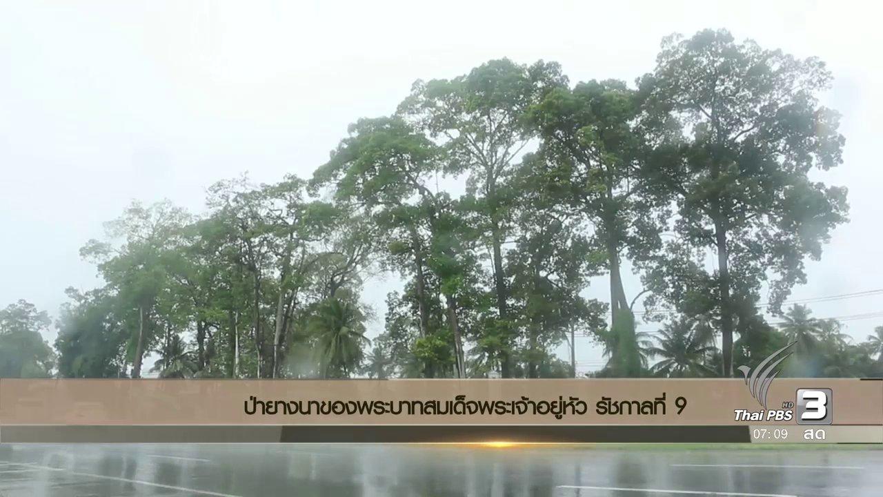 วันใหม่  ไทยพีบีเอส - ป่ายางนาของพระบาทสมเด็จพระเจ้าอยู่หัว รัชกาลที่ 9