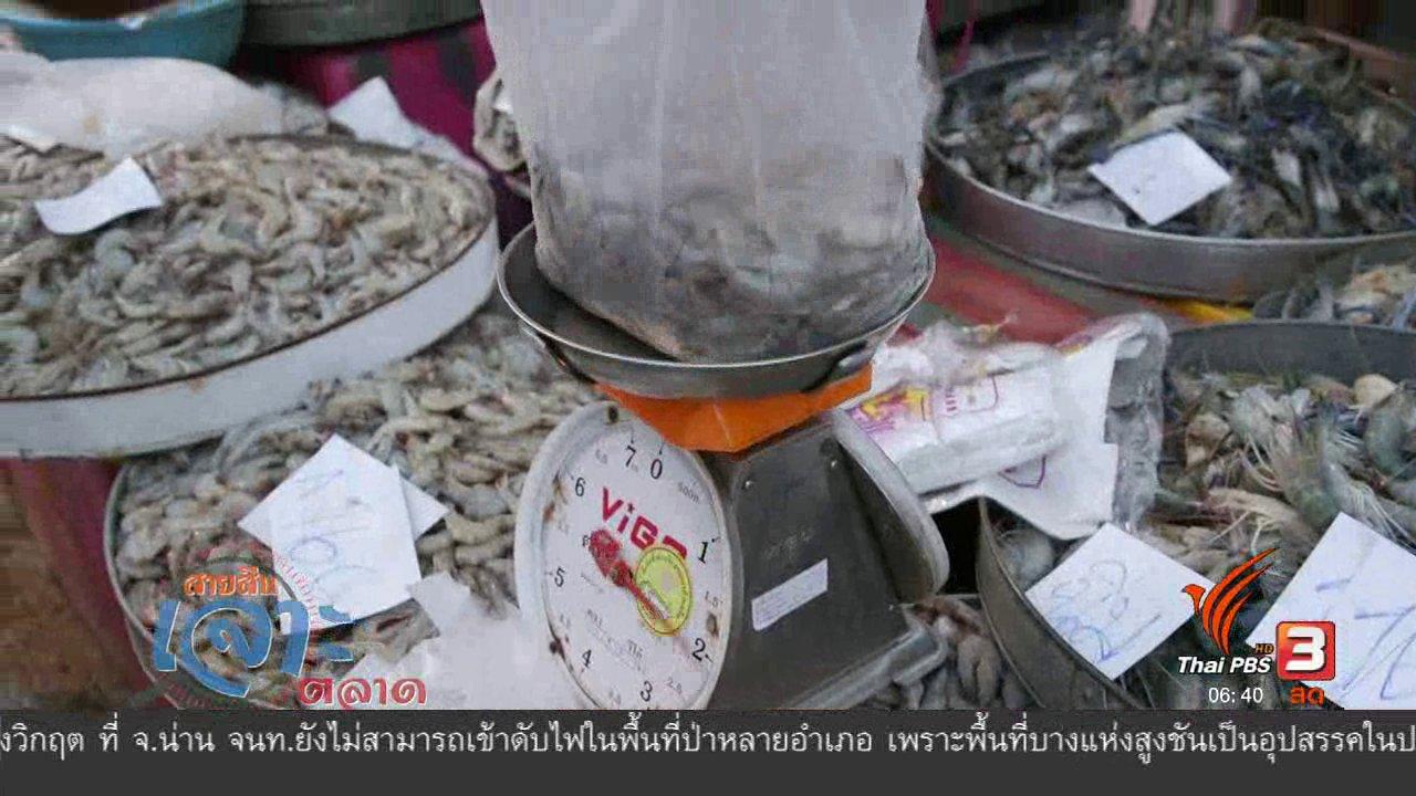 วันใหม่  ไทยพีบีเอส - สายสืบเจาะตลาด : สืบราคากุ้ง จ.ฉะเชิงเทรา