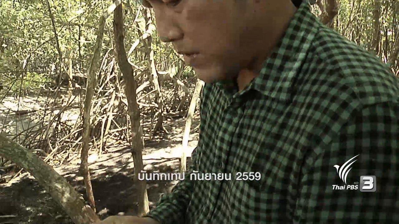 ข่าวค่ำ มิติใหม่ทั่วไทย - ตะลุยทั่วไทย : ใบโกงกางทอด