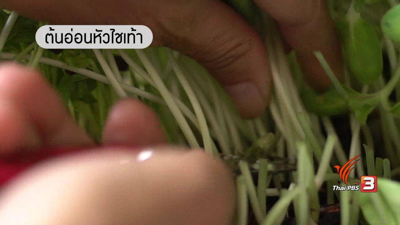 ลุยไม่รู้โรย - เมนูผักงอก