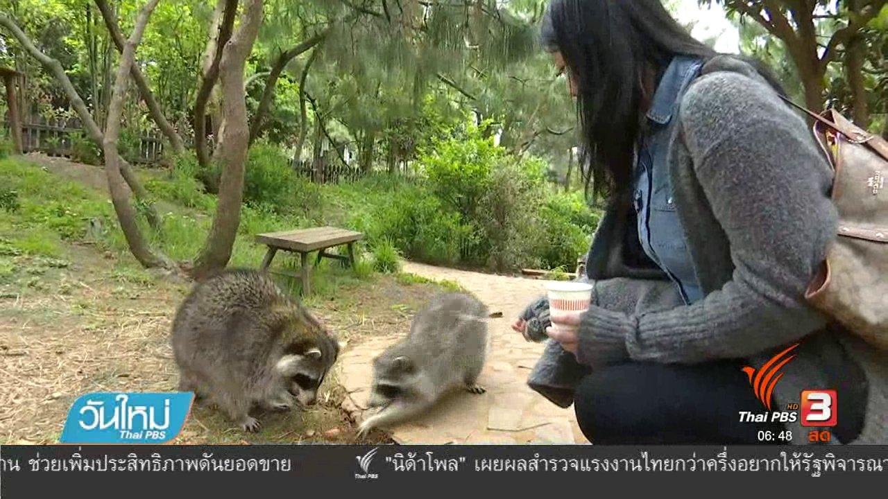 วันใหม่  ไทยพีบีเอส - แร็กคูนในจีนขออาหารจากนักท่องเที่ยว