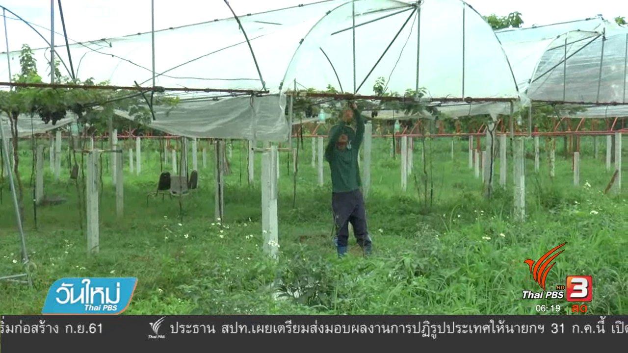 วันใหม่  ไทยพีบีเอส - ตำรวจพะเยาใช้เวลาว่างปลูกสวนองุ่น