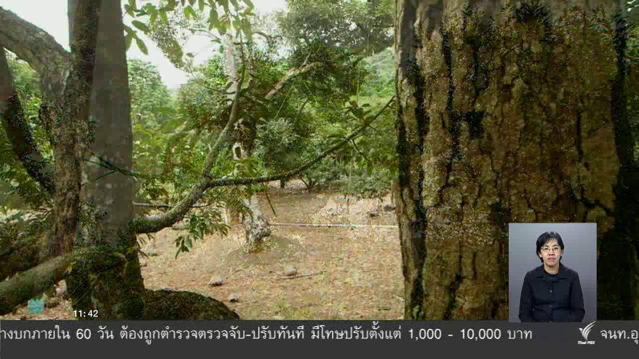 จับตาสถานการณ์ - ตะลุยทั่วไทย : ทุเรียนกวนเกาะช้าง