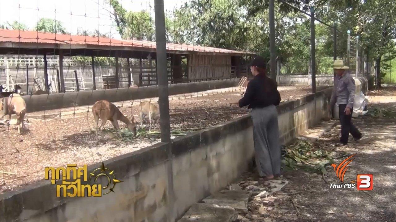 ทุกทิศทั่วไทย - อาชีพทั่วไทย : เพาะพันธุ์ลูกกวางขาย