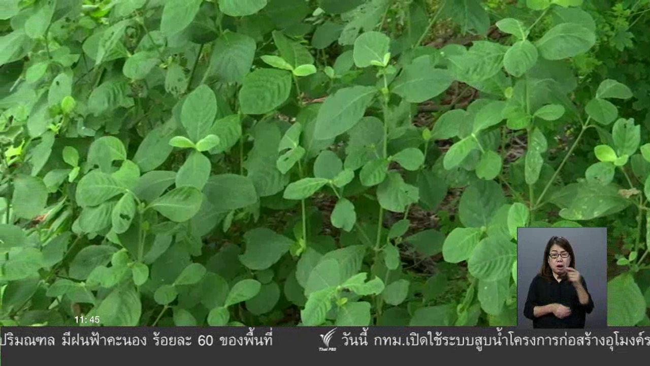 จับตาสถานการณ์ - ตะลุยทั่วไทย : ข้าวต้มด่าง