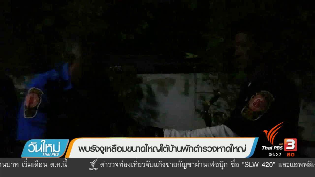 วันใหม่  ไทยพีบีเอส - พบรังงูเหลือมขนาดใหญ่ใต้บ้านพักตำรวจหาดใหญ่