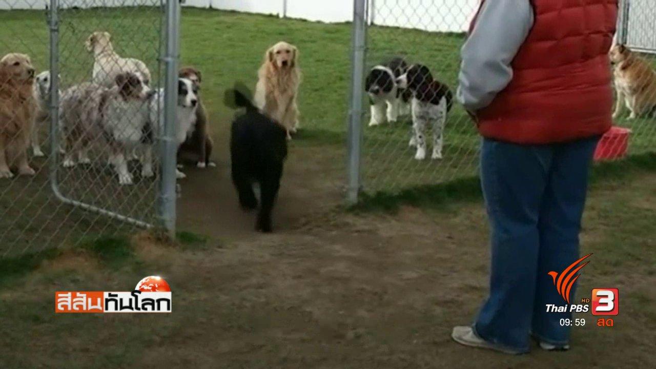 สีสันทันโลก - สุนัขงอนเจ้าของเรียกไม่หัน