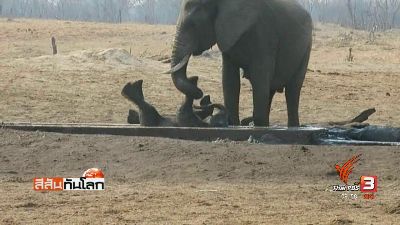 สีสันทันโลก - ช้างพลายช่วยชีวิตลูกช้าง.asf