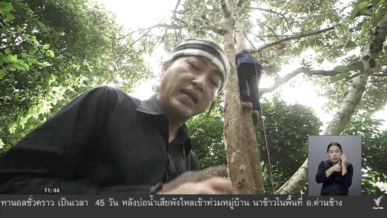 จับตาสถานการณ์ - ตะลุยทั่วไทย : ทุเรียน