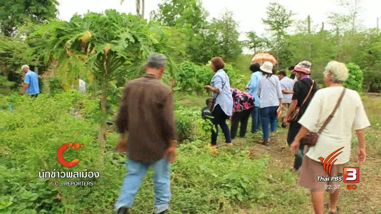 """ที่นี่ Thai PBS - นักข่าวพลเมือง : องค์ความรู้ชาวนา """"ปลูกผักอินทรีย์ตามฤดูกาล"""""""
