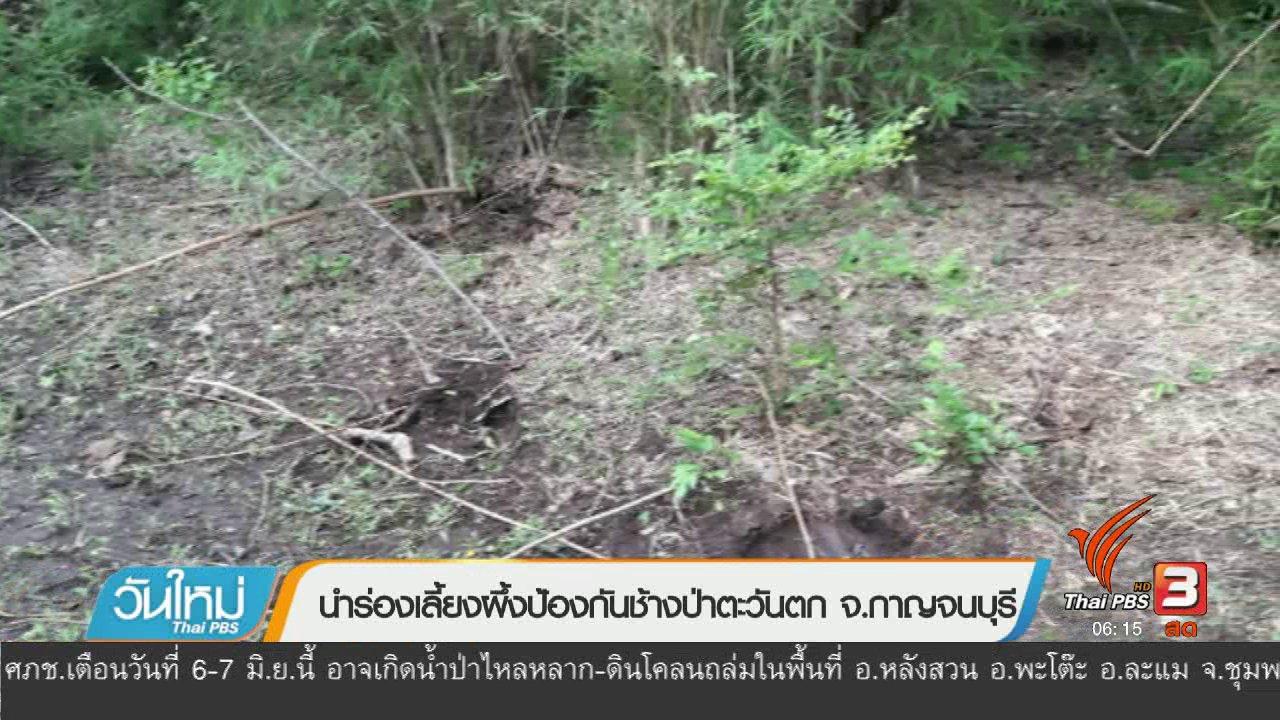 วันใหม่  ไทยพีบีเอส - นำร่องเลี้ยงผึ้งป้องกันช้างป่าตะวันตก จ.กาญจนบุรี