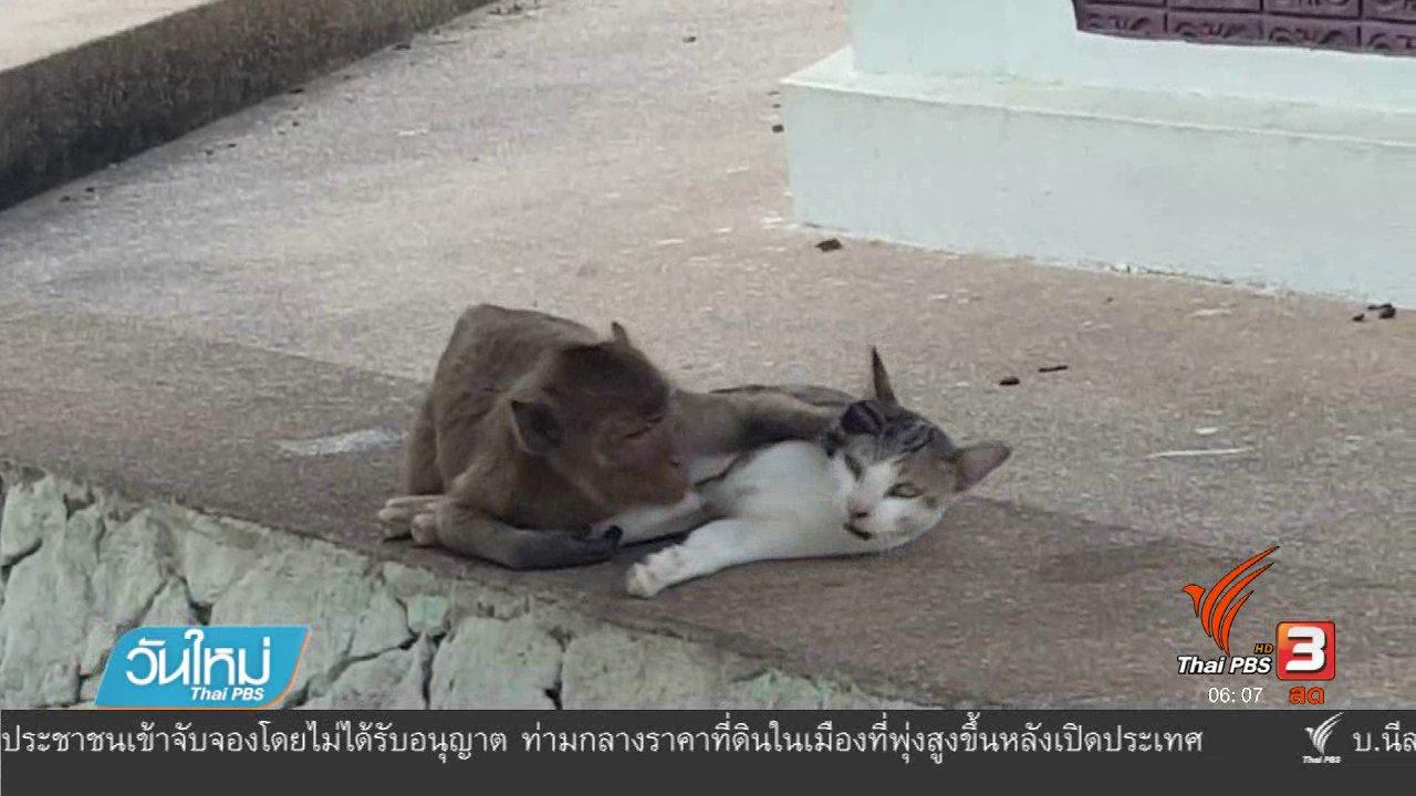 วันใหม่  ไทยพีบีเอส - ลิงกับแมวเพื่อนซี้ต่างสายพันธุ์