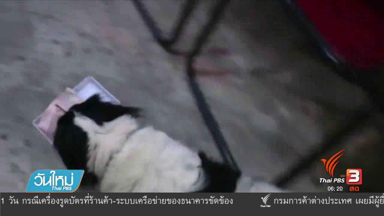 วันใหม่  ไทยพีบีเอส - สุนัขแสนรู้ระยองช่วยเจ้าของเก็บเงินจากลูกค้า