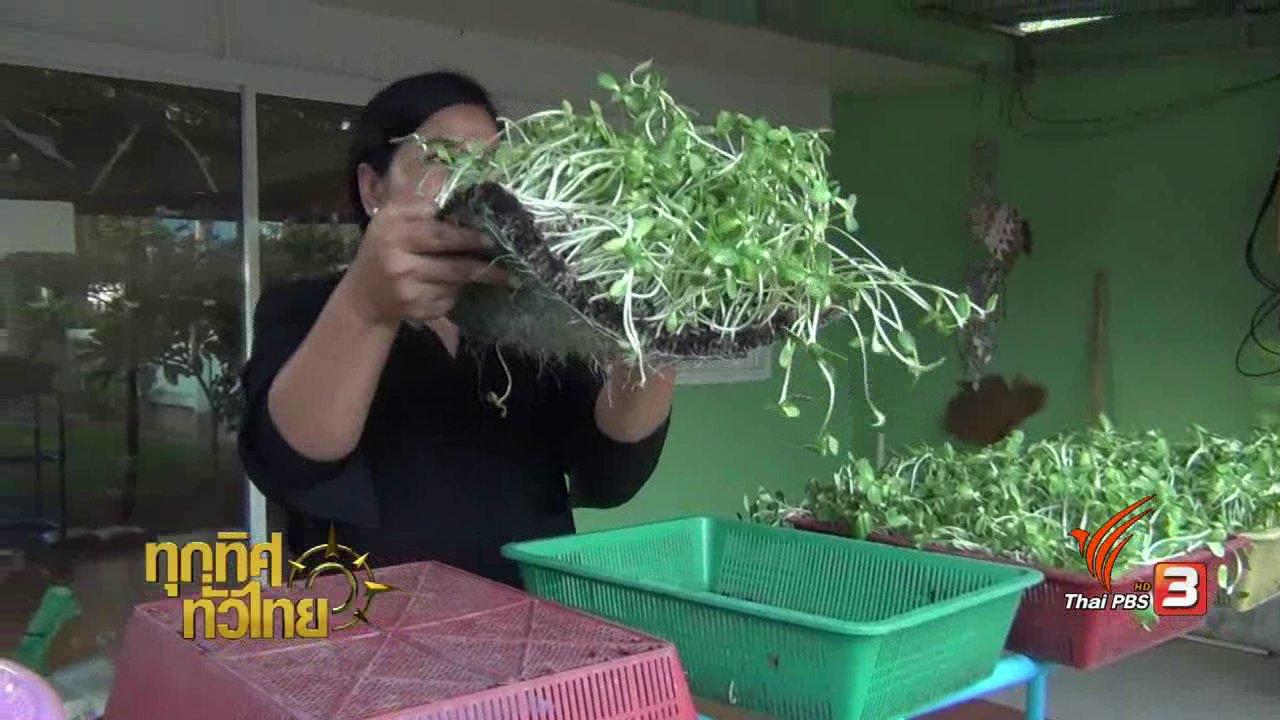 ทุกทิศทั่วไทย - อาชีพทั่วไทย : ปลูกต้นอ่อนทานตะวัน