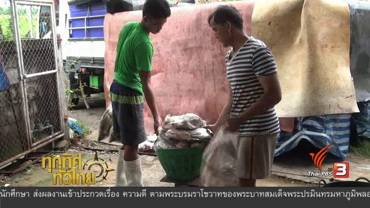 ทุกทิศทั่วไทย - อาชีพทั่วไทย : การทำปลาส้ม