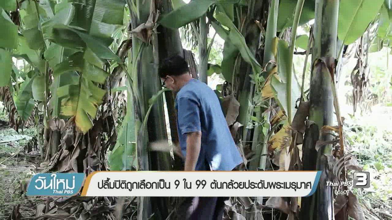 วันใหม่  ไทยพีบีเอส - ปลื้มปิติถูกเลือกเป็น 9 ใน 99 ต้นกล้วยประดับพระเมรุมาศ