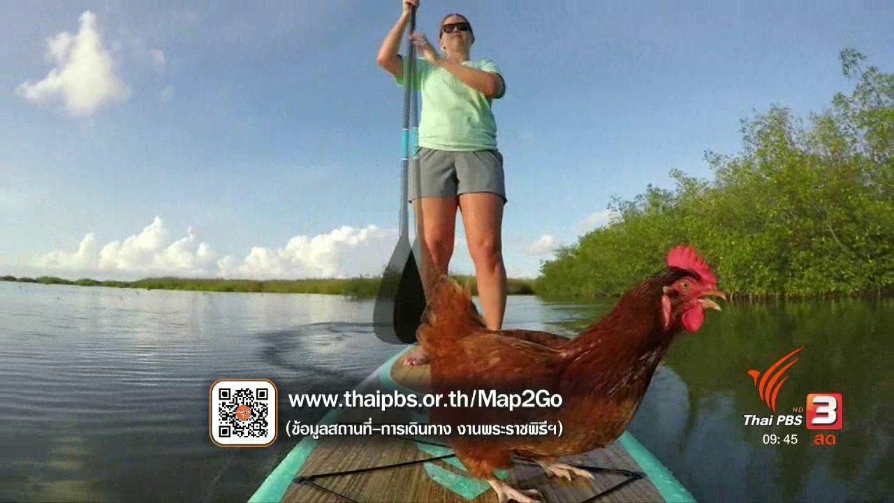 สีสันทันโลก - แม่ไก่ชอบเล่นกระดานพาย