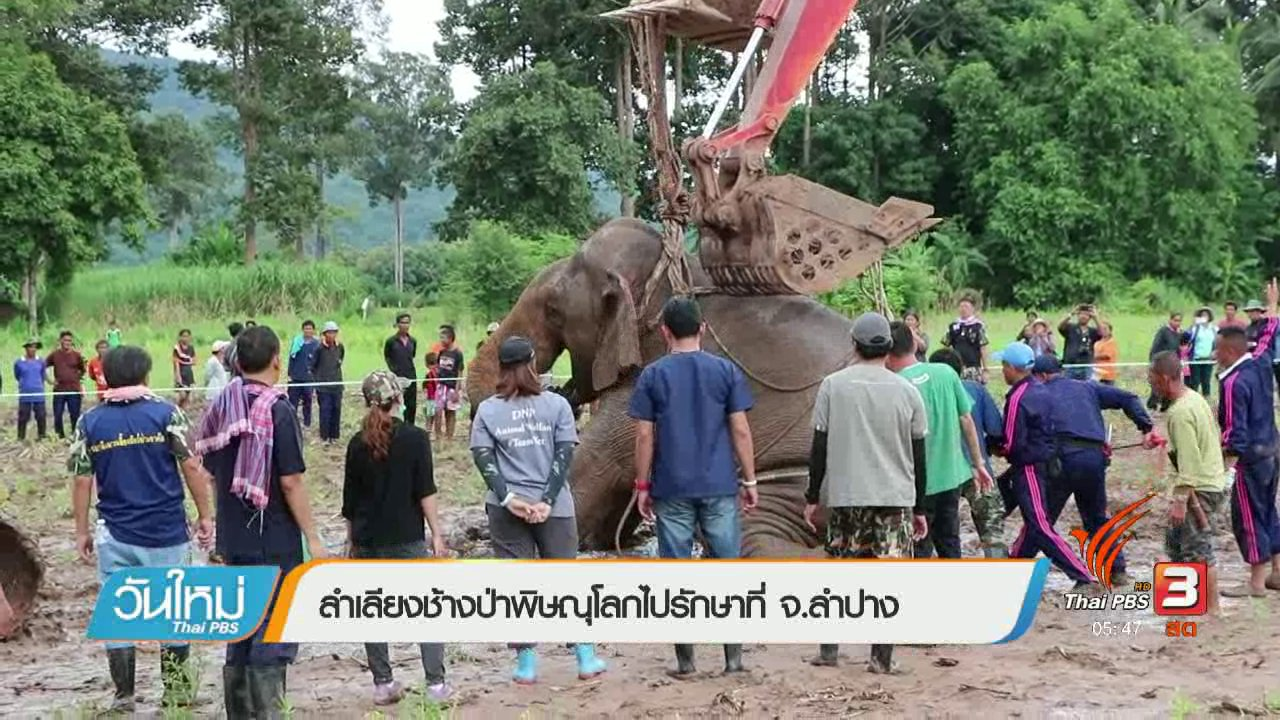 วันใหม่  ไทยพีบีเอส - ลำเลียงช้างป่าพิษณุโลกไปรักษาที่ จ.ลำปาง