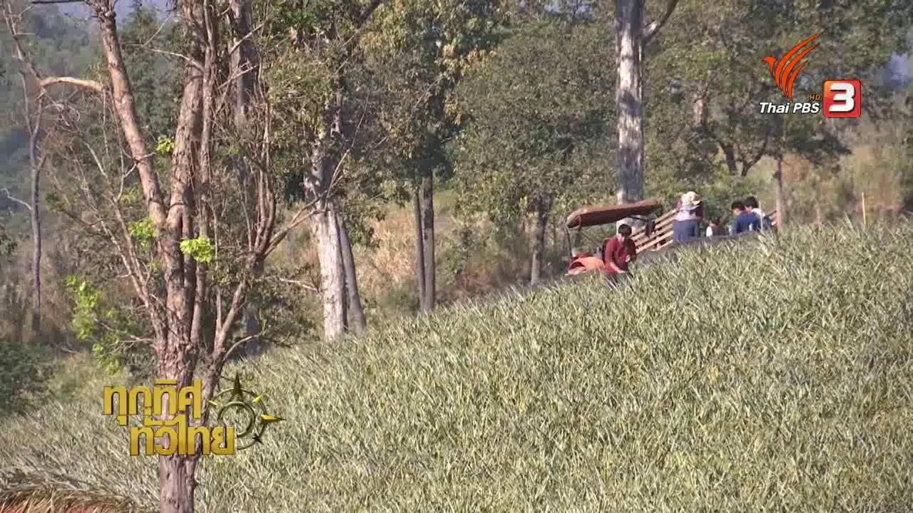 ทุกทิศทั่วไทย - เกษตรกรอุตรดิตถ์แปรรูปสับปะรดห้วยมุ่นช่วยเพิ่มราคา