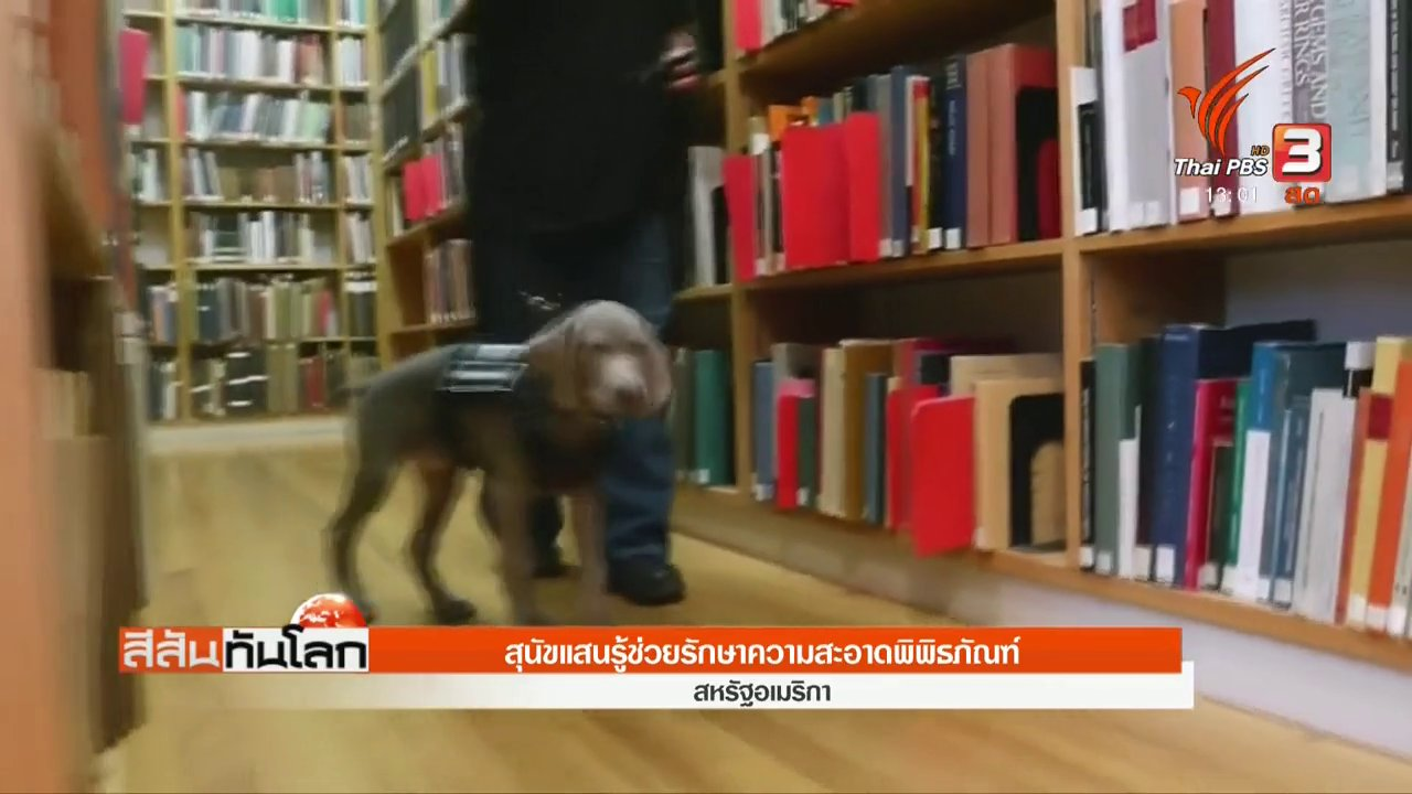 สีสันทันโลก - สุนัขแสนรู้ช่วยรักษาความสะอาดพิพิธภัณฑ์