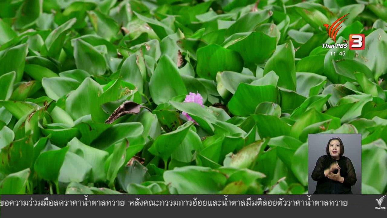 จับตาสถานการณ์ - ตะลุยทั่วไทย : แกงส้มผักตบ