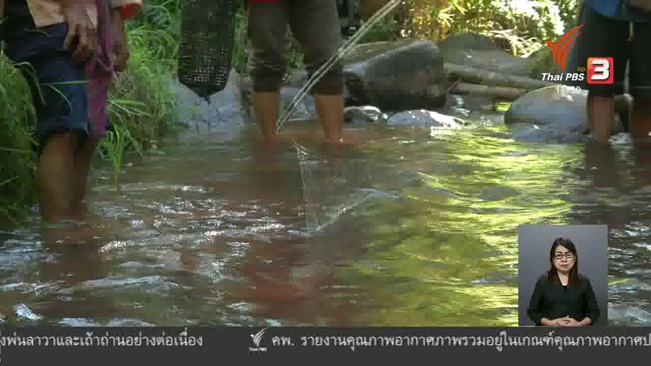 จับตาสถานการณ์ - ตะลุยทั่วไทย : ปลาหิ่ม ปลาจาด