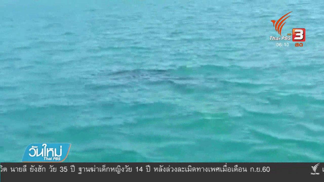 วันใหม่  ไทยพีบีเอส - พบฉลามวาฬในอ่าวพังงา