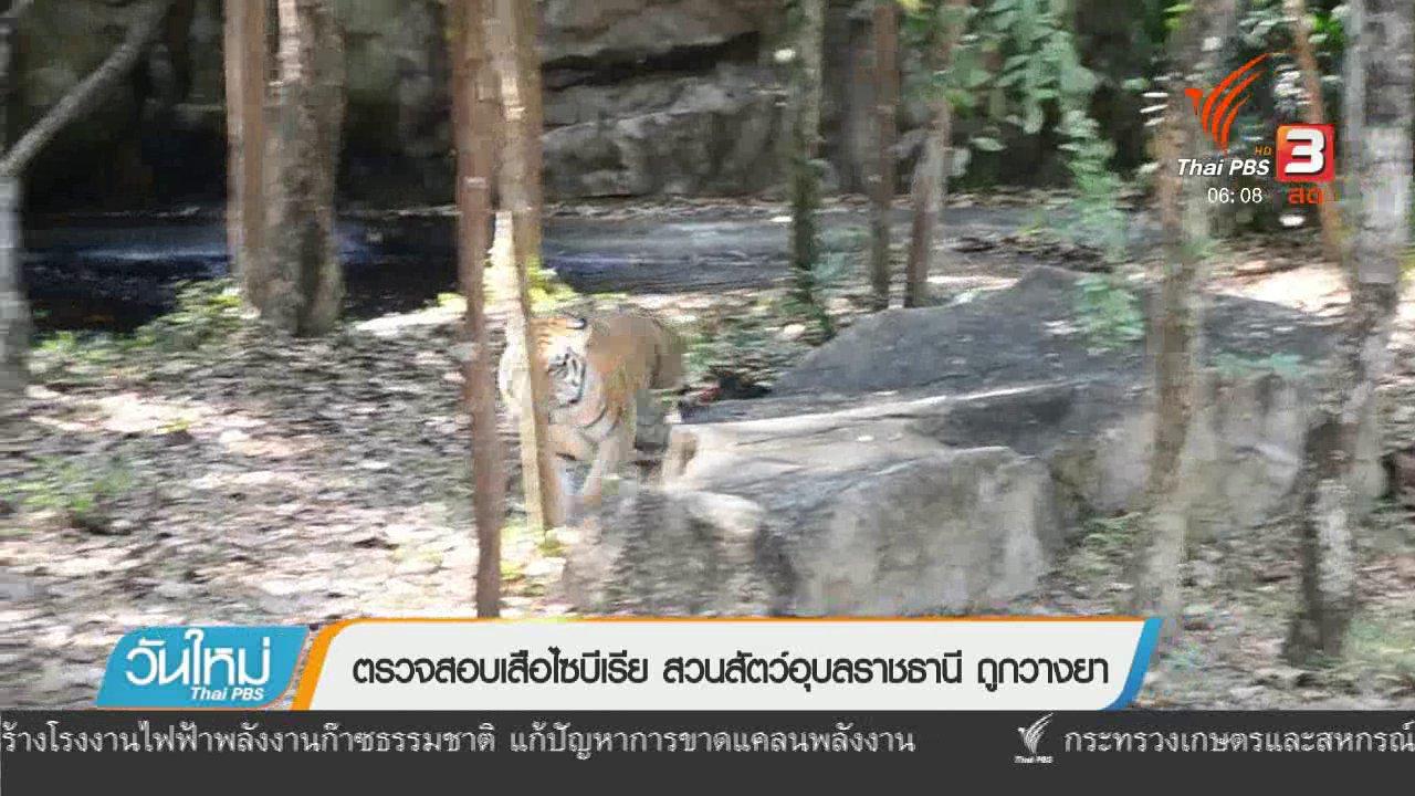 วันใหม่  ไทยพีบีเอส - ตรวจสอบเสือไซบีเรีย สวนสัตว์อุบลราชธานี ถูกวางยา