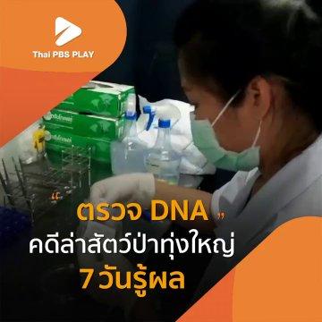 ตรวจ DNA คดีล่าสัตว์ป่าทุ่งใหญ่ 7 วันรู้ผล