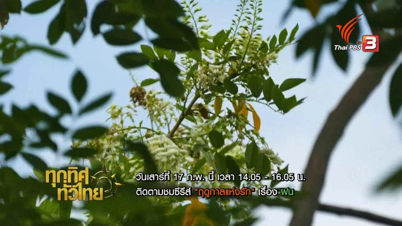 ทุกทิศทั่วไทย - ปลูกดอกแคฝรั่งเก็บดอกขาย