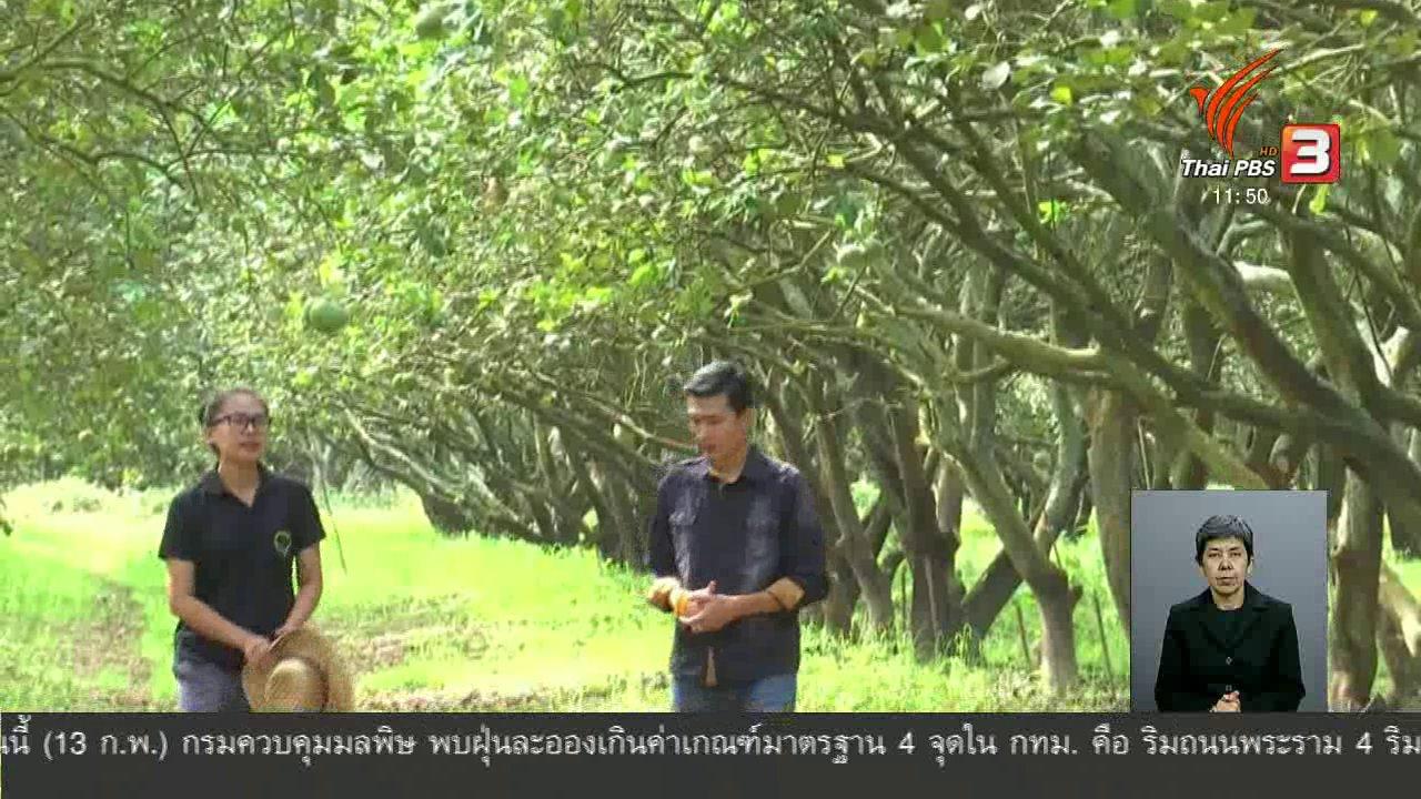จับตาสถานการณ์ - ตะลุยทั่วไทย : ปลูกส้มโอกระเช้า