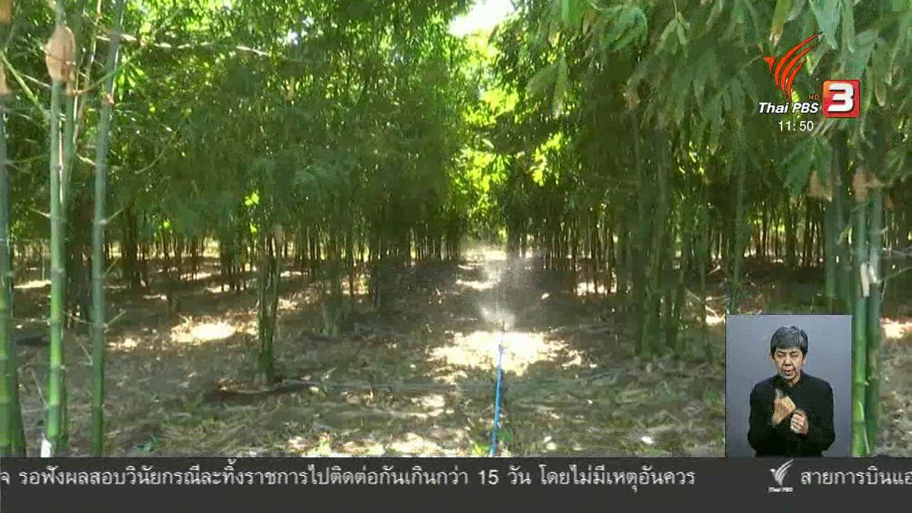 จับตาสถานการณ์ - ตะลุยทั่วไทย : ไผ่กิมซุง