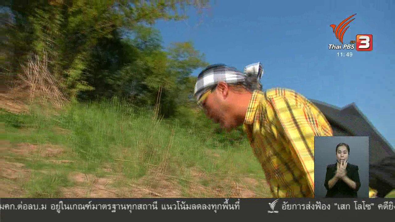 จับตาสถานการณ์ - ตะลุยทั่วไทย : เขียดอุ