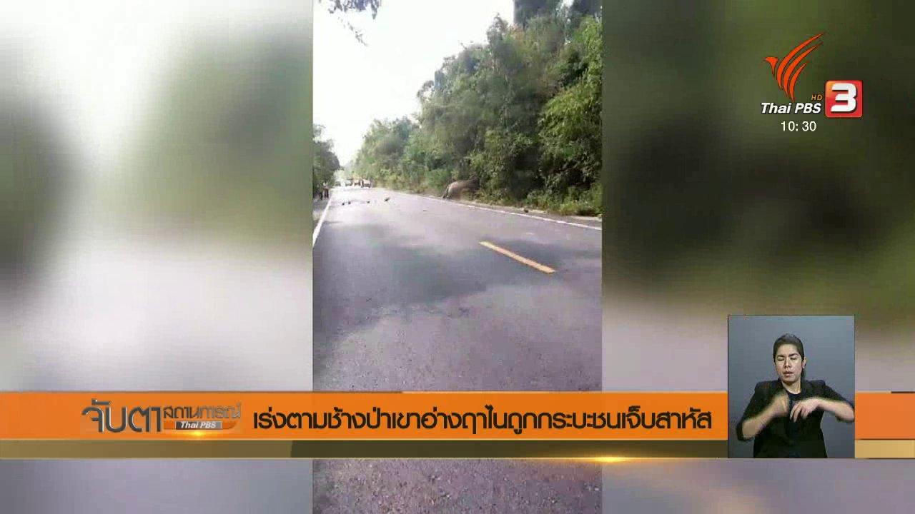 จับตาสถานการณ์ - เร่งตามช้างป่าเขาอ่างฤาไนถูกกระบะชนเจ็บสาหัส