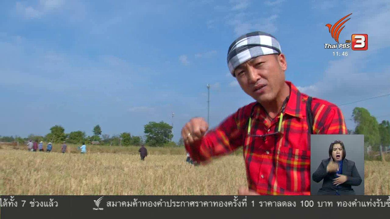 จับตาสถานการณ์ - ตะลุยทั่วไทย : หนูนา