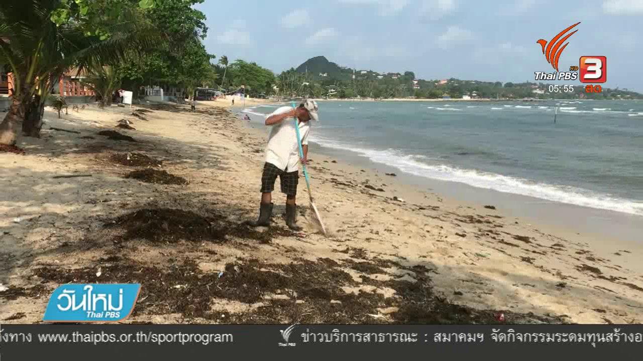 วันใหม่  ไทยพีบีเอส - พบก้อนสีดำคล้ายน้ำมันเกลื่อนหาดเกาะสมุย