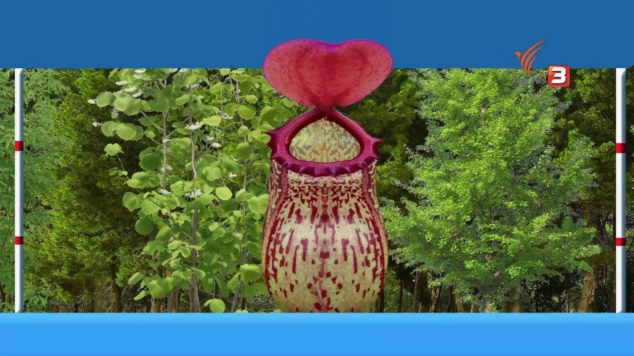 TataTitiToto ไดโนจอมป่วน - เกร็ดน่ารู้กับตาต้าตีตี้โตโต้ : มารู้จักกับหม้อข้าวหม้อแกงลิง