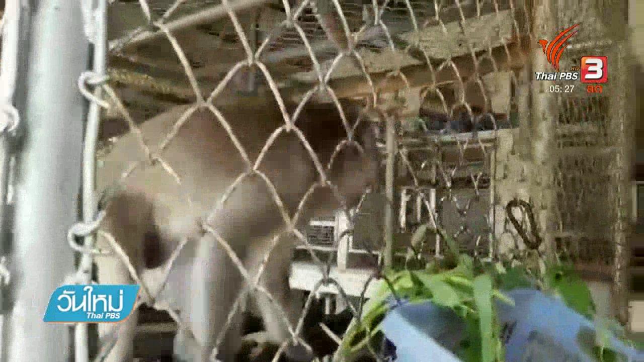 """วันใหม่  ไทยพีบีเอส - มูลนิธิฯชี้แจง เลี้ยงดูลิง """"มะลิ"""" หลังเจ้าของขอคืน"""